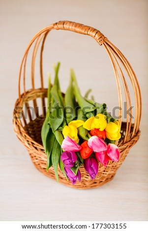 bouquet of tulips in a basket. card for congratulations, March 8, International Women's Day, Mother's Day - stock photo
