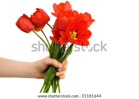 bouquet of tulips in a hand against a white background