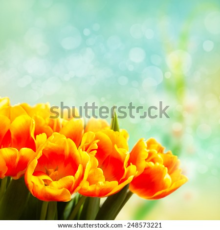 bouquet of tulips in front of a bokeh background - stock photo