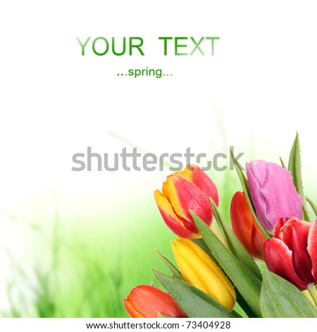 Bouquet of tulips isolated - stock photo