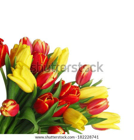 Bouquet of tulips isolated on white background - stock photo