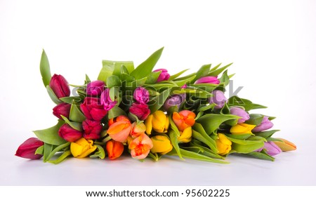 Bouquet of tulips, isolated on white background - stock photo