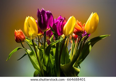 Bouquet of tulips on a colorful background