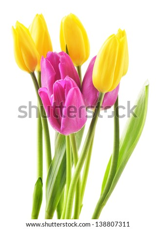 Bouquet of tulips on white background. Flowers