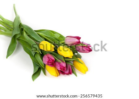 Bouquet of Tulips on white background. Selective focus. - stock photo