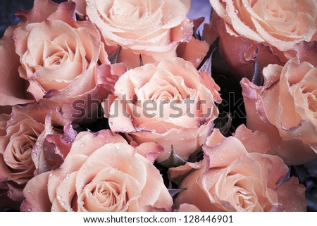 Bouquet of wet pink roses flowers macro photo - stock photo