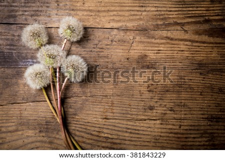 Bouquet of white dandelions on brown wood table with empty copy-space for text - stock photo