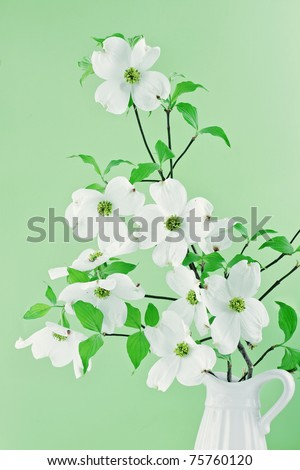 Bouquet of white Dogwood blossoms against a green background. - stock photo