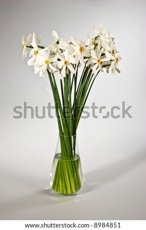 bouquet of white narcissus on the vase