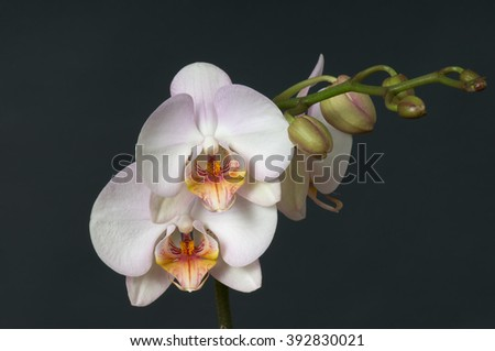 bouquet of white orchids on a background color