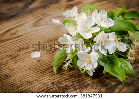 Bouquet of white pear flowers on grungy wooden background with empty space for text - stock photo
