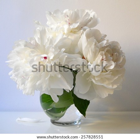 Bouquet of white peony flowers in a vase. Floral still life with bouquet of peonies. Home decoration. - stock photo