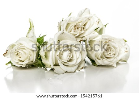 Bouquet of white roses over a white background
