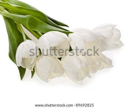 bouquet of white  tulips on white background - stock photo