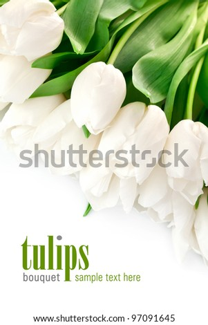 bouquet of white tulips with green leaves isolated on white background - stock photo
