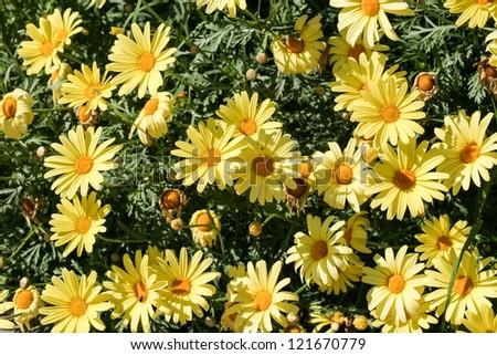 Bouquet of wild flowers - stock photo