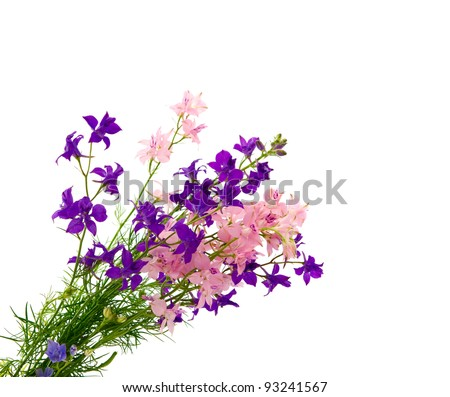 bouquet of wild flowers isolated on white background - stock photo