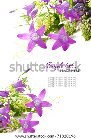 Bouquet of wild flowers on a white background - stock photo