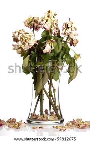 Bouquet of withered roses in glass vase. - stock photo