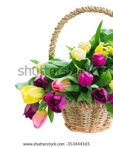 bouquet of yellow and purple tulips  in basket  close up isolated on white background