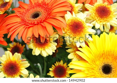 bouquet of yellow chrysanthemums and red gerberas