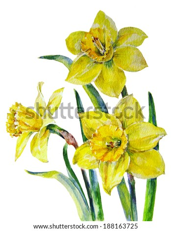 bouquet of yellow daffodils on white background - stock photo
