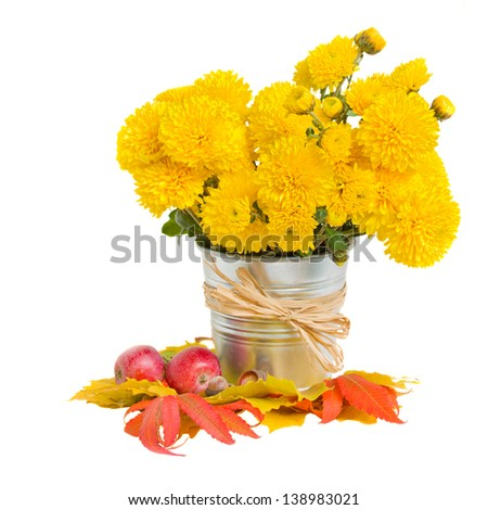 bouquet of yellow mums in pot with autumn leaves  isolated on white background - stock photo