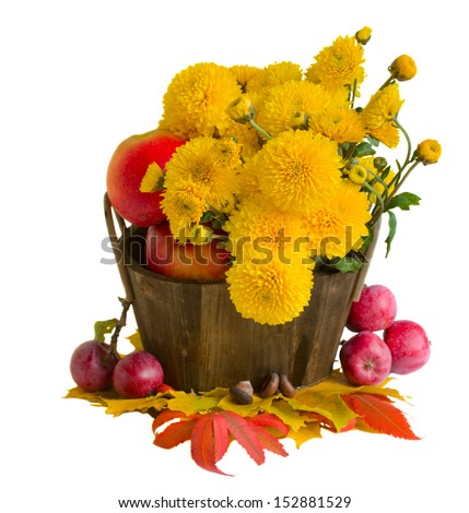 bouquet of yellow mums with autumn leaves and apples isolated on white background - stock photo