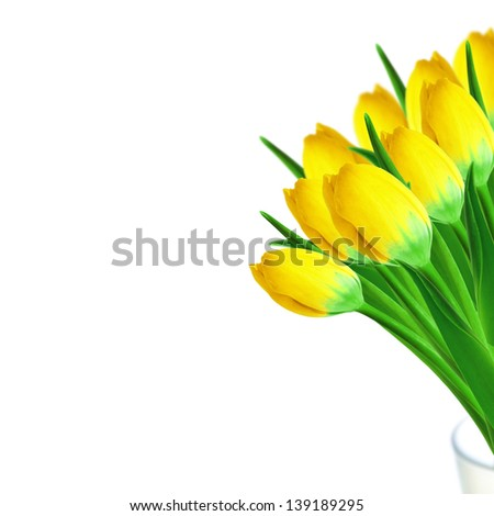 Bouquet of yellow tulips on the white background - stock photo