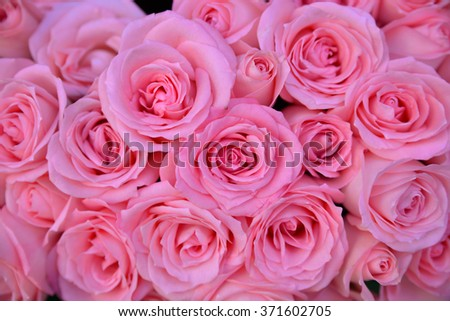 bouquet pink rose background   - stock photo