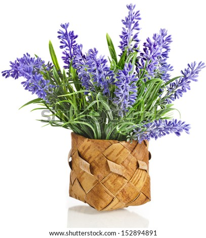 bouquet purple Lavender in wooden basket isolated over white background - stock photo
