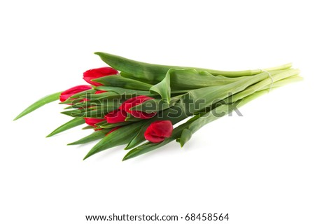 Bouquet red tulips isolated on white background