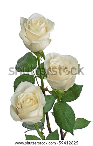 Bouquet with white roses - stock photo