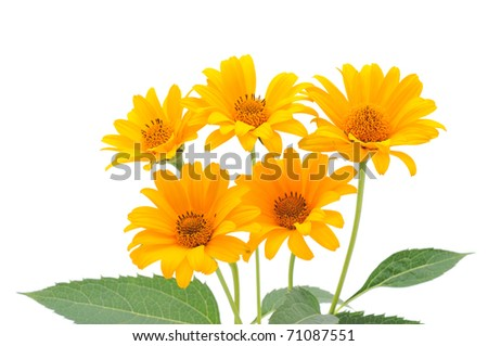 Bouquet yellow flowers isolated on the white - stock photo
