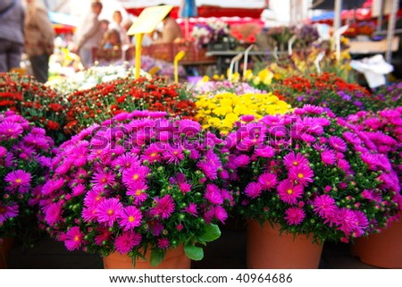 Bouquets of colorful chrysanthemums sold at farmers market in France - stock photo