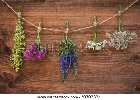Bouquets of medicinal herbs on an old wooden background - stock photo
