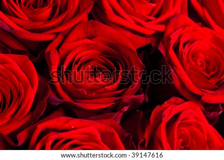 Bouquets of Roses - stock photo