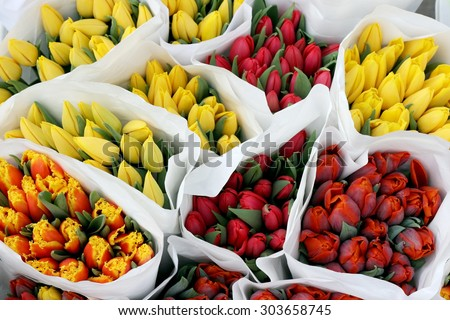 bouquets of tulips - stock photo