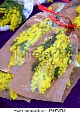 bouquets of yellow Mimosas sold at market for women's day - stock photo