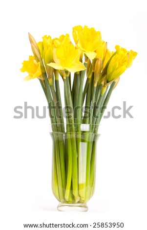 Bouquette of dhaffodils