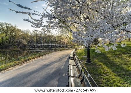 Bow bridge in spring Central Park, New York City - stock photo