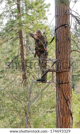Bow hunter in a ladder style tree stand with bow at full draw, demonstrating good safety by using a safety harness - stock photo