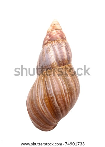 Bowl of a snail on a white background - stock photo