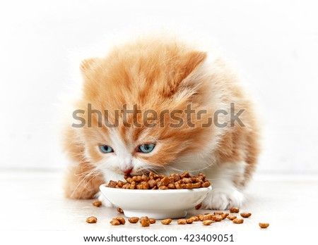 bowl of cat food and small kitten, selective focus
