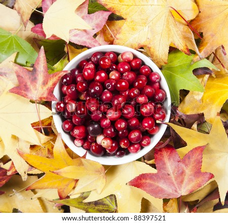 Bowl of cranberries - stock photo