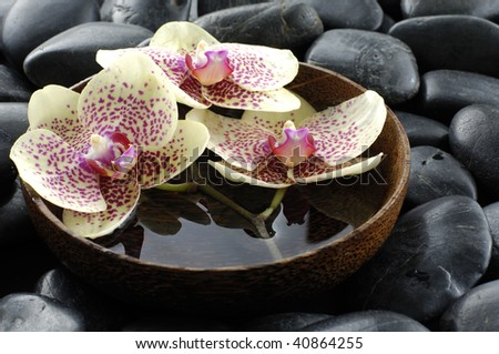 Bowl of orchid on pebble - stock photo