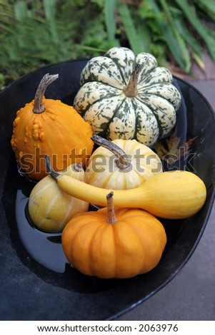 Bowl of pumpkins and gourds - stock photo