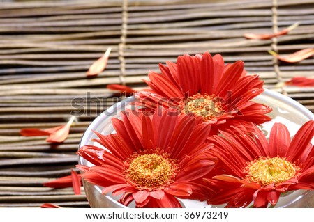 Bowl of sunflower with petal on mat - stock photo