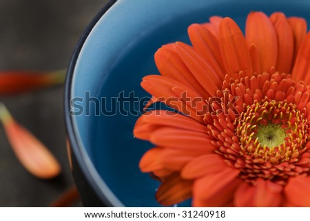 bowl of water and flower. SPA concept - stock photo