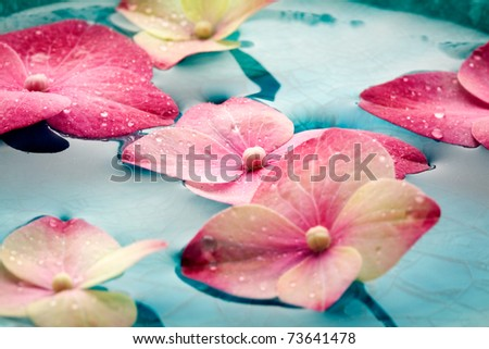Bowl of water with pink hortensia petals - stock photo